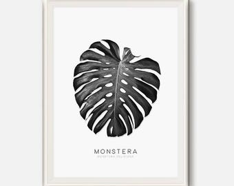 Monstera Leaf, Nature Photography, Leaf Art, Monstera print, Tropical Leaves, Black and white photo, Botanical art, Modern Print, Leaves Art