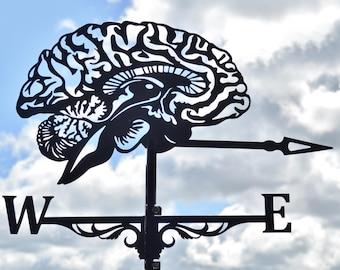 Brain Sagittal Slice Metal Weathervane with Roof Mount Wind Vane Decor Cerebrum