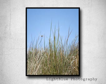 Sea Grass Print  Dune Grass photography Beach photography Blue Sky Photo Beach house Decor green blue Summer decor Fine Art Photo Print