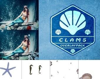 Clams - 35 Muschel Overlays