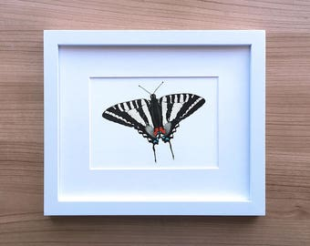 Zebra Swallowtail Butterfly Illustration Art Print   Colored Pencil Drawing by Katherine Vason   Petals and Papillons