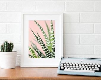 Large succulent print Succulents photography Cactus prints Cactus photography home decor Cacti prints Cacti photography Living room decor