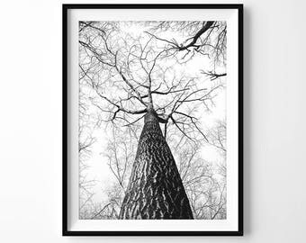 Branches Print, Black and White Printable, Tree Photography, Modern Wall Art, Forest Photo, Nature Poster, Modern Decor, Digital Download