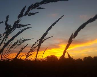 Monticello sunset