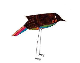 Rainbow-bellied black bird wall art print