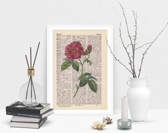 Print-French rose-on antique page
