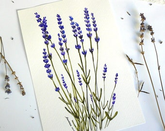 Watercolor Lavender  Original watercolor painting  Flowers watercolor  Purple Flowers  Lavender watercolor  Botanical illustration