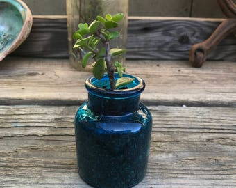 Blue bayou succulent.  A pretty accent to any home.