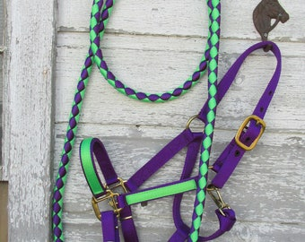 Horse Halter with matching lead