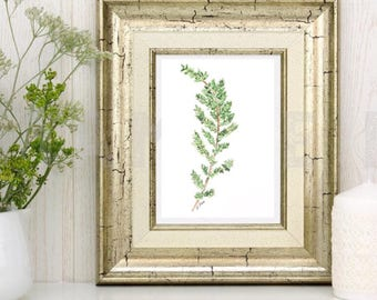 Herb Painting Print, Kitchen Art, Original Watercolor herb, Botanical watercolor, Thyme, Green painting
