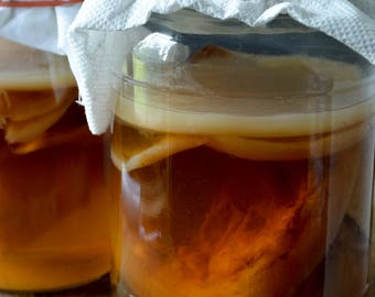 Live Organic Kombucha SCOBY for Brewing Fermented Tea - Probiotic