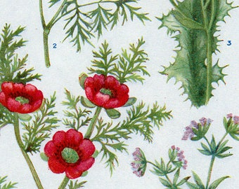 Set of Four Vintage Charts of British Wild Flowers #2
