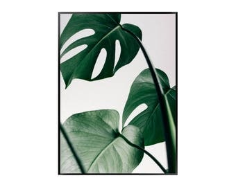Monstera Leaves Print | Botanical | Green | Tropical - Plant - Poster
