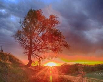 Crooked Tree Sunset