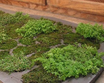 Live moss shower mat beautiful unique bath mat, bring the beautiful of the outdoors into your home. NOW with FREE SHIP