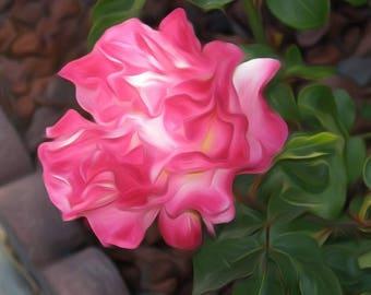 Pink Flower - Digitally Enhanced 8x10 Photo Print