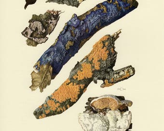 Vintage lithograph of plant pathogens, wood-decay fungi, corticiaceae fungi, crust fungi from 1964