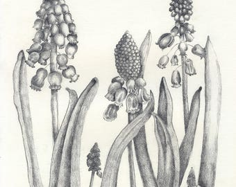 Muscari Flower Notecard