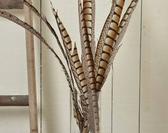 Lady Amhurst Feathers | Pheasant Feathers | Natural Feathers | Natural Decorations