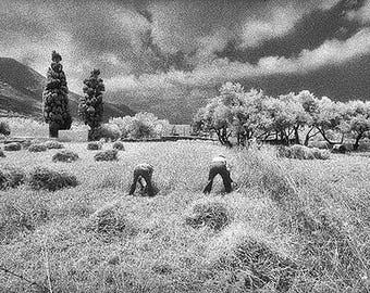 Cutting the Fields, Amorgos Island, Greece
