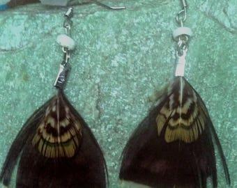 "Fantastic Cruelty Free Puka Shell,  Pheasant and Quail Feather Earrings 2.25"""