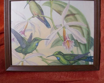 Unsigned print with three hummingbirds and flowers