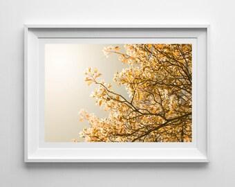 Nature Photography, Blossom Tree, Sunny, Spring, Flowers, Original Print, Landscape, Botanical Wall Art, Decor