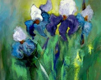 Iris, beautiful flowers
