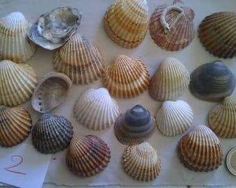 2 c) ocean shells, grass, clam shell