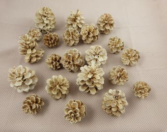 Set of pinecones, white, for home decoration
