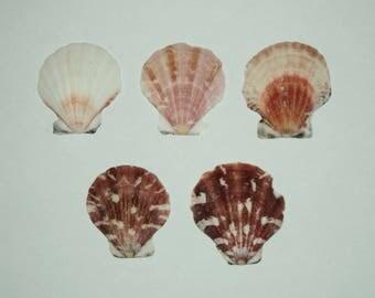 set of 5 colorful shells