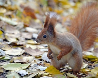 Cute Squirrel Wall art Animal photograph Autumn Photography Wildlife Photography Digital photo Nature lover Color Instant Photo Download