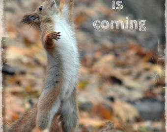 Autumn Photography Cute Red Squirrel Photo Fall Decor Welcome Autumn Photo Autumn is coming Digital download Fall home decor Digital Art