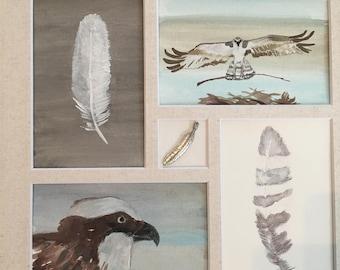 Osprey (matted & framed)