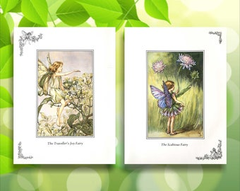 Scabious and Traveller's Joy Flower Fairy Print from vintage book. Woodland Fairies Nursery themed gift for girl. Illustration for framing