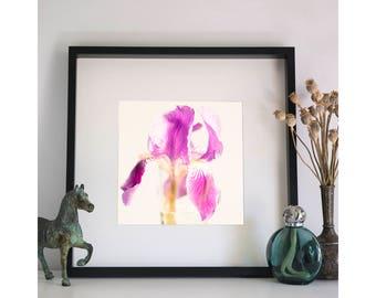 Iris, Photographic Print, 12x12
