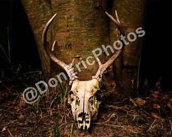 Deer Skull Photo