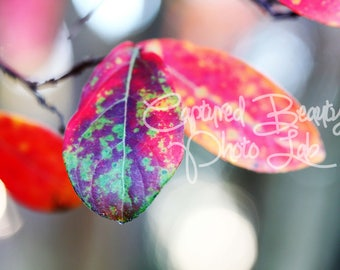 Fall Leaves Photography, Autumn Leaves, Print, Colorful Leaves
