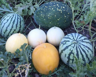 Watermelon Landrace Seeds