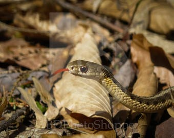 Snake in the Leaves | Snake Photo Art | Nature Lover Gift | Fine Art Photography | Personalization | BDPhotoShoppe | Home Office Decor