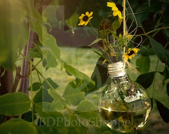 Lightbulb Vase | Landscape Photo Art | Nature Lover Gift | Fine Art Photography | Personalization | BDPhotoShoppe | Home Office Decor
