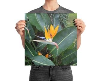 Bird Of Paradise Premium Print