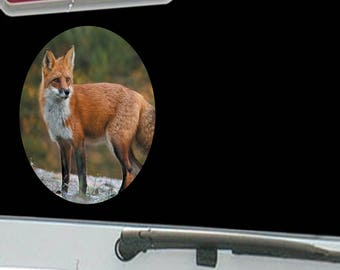American Red Fox Wildlife Hunting Scene