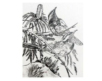 Botanical Print, Mangrove Honey Eater, original print, Drypoint, art print, contempory, plant  print, foliage.Black and White, nature