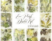Digital Eco Prints Page Kit  - Perfect for journals, cards, mixed media, scrapbooking (10 digital pages)