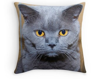 Grumpy British Blue Cat Cushion