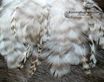 Grizzly Feathers Black White Grey Striped Feathers Real Feathers Barred Rooster Feathers Real Bird Feathers For Crafts Cruelty Free / 2139