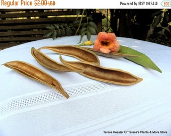 Save25% 4 Seed Pod halfs-Dried Floral-Make a small canoe with these-Natural seed pods