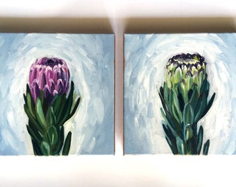 """Protea Flower Paintings - New Bloom - 10""""x10"""" - Oil Painting"""