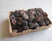75 to 100 small size pine cones. Good for rustic decorations, natural decor, craft projects, DIY projects and/or great fire starter